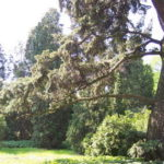 Rekordowe drzewa