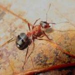 Życie mrówek