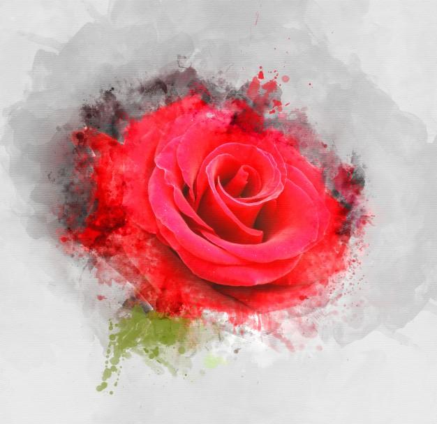 róża - pełna symbolika