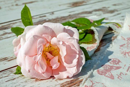 Symbolika Róży Szlakami Wiary
